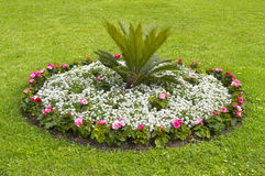 Round flower bed. Over green grass Stock Image