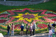 A large circle with patterns of tulips. Round flower bed of tulips during flowering in spring Kiev, Ukraine Royalty Free Stock Photography