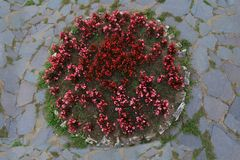 Round flowerbed texture surrounded by stone pavement top view background Royalty Free Stock Image