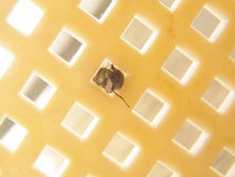 Round fly in a square hole Royalty Free Stock Photography
