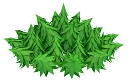 Round Forest. Fir tree 3d models  with white background Stock Image