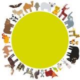 Round frame. animal card template. bison bat fox wolf elk horse camel partridge fur seal Walrus goats Polar bear Eagle bull raccoo. N panda leopard Brown bear Royalty Free Stock Images