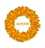 Round Frame from Autumn Orange Leaves Stock Photos