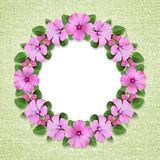 Round frame with bindweed flowers Royalty Free Stock Image