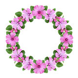 Round frame with bindweed flowers Royalty Free Stock Images