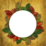 Round frame with colorful leaves Stock Photo