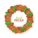 Round frame composed of pecan nut. Vector card illustration. Nuts filbert frame, hazelnut fruit in the shell, shelled. Leaves for packaging design food, butter Stock Photo