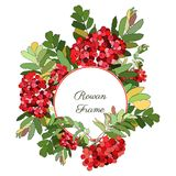 Round frame decorated with rowan-berries Royalty Free Stock Photos