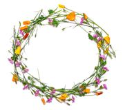 Round frame of delicate flowers. Spring yellow, purple, pink flowers on white background Royalty Free Stock Photo