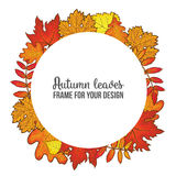 Round frame with fall leaves - maple, oak, rowan, birch Stock Images
