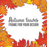 Round frame with fall leaves - maple, oak, rowan, birch Stock Photography