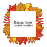 Round frame with fall leaves - maple, oak, rowan, birch Royalty Free Stock Photography