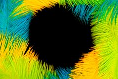 Round frame of feathers for the Brazilian carnival. The colors o. Poster for the carnival. Bright festive feathers in the color of the flag of Brazil Stock Images