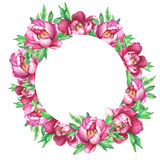 Round frame with flowering pink peonies, isolated on white background. Royalty Free Stock Photos
