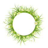 Round frame with grass and daisies. Round frame with green grass and daisies on white background Royalty Free Stock Images