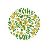 Round frame Hypericum, St. John`s wort or Hartheu branch vector sketch hand drawn healing plant isolated on white. Background, Tutsan herbs design for card Royalty Free Stock Photo