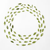 Round frame of leaves Stock Photography