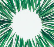 Round frame made from green leaves of Narcissus on white background with space for text Royalty Free Stock Image