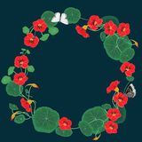 Round frame of nasturtium flowers with butterflies. Vector template royalty free illustration