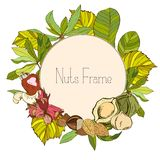 Round frame with nuts and leaves. In color Stock Photo