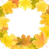Round Frame Of Maple Leaves Royalty Free Stock Photos