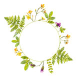 Round frame with painted watercolor green plants and wild flowers. Nature inspired border for natural cosmetics, spring Stock Photo