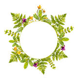 Round frame with painted watercolor green plants and wild flowers. Nature inspired border for natural cosmetics, spring Royalty Free Stock Photos