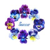 Round frame pansies watercolor with summer lettering on white background. Round frame pansies watercolor with summer lettering Royalty Free Stock Photography