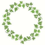 Round frame with parsley on white background.  Hand drawn  Royalty Free Stock Image