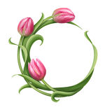 Round frame with pink tulips illustration Stock Image