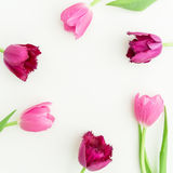 Round frame of pink tulips on white background. Flat lay, top view. royalty free stock image