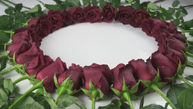 Round frame of red roses with water droplets on white background Royalty Free Stock Image