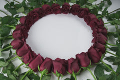 Round frame of red roses with water droplets on white background Stock Image