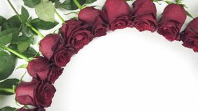Round frame of red roses with water droplets on white background stock footage video stock video footage