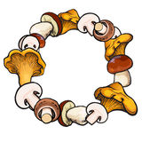 Round frame of sketch edible mushrooms with place for text Stock Image