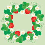 Round frame with Strawberries, flowers and leaves. Isolated on gray background Stock Image
