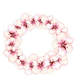 Round frame template blooming sakura pink flowers. For design holiday invitation - vector Stock Image