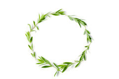 Round frame from thyme fresh herb isolated on white background Stock Photos