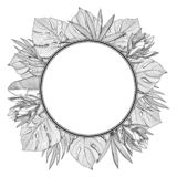 Round frame with tropical, jungle palm leaves stock images