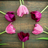 Round frame of tulip flowers isolated on wood background. Flat lay, Top view Royalty Free Stock Photos