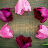 Round frame of tulip flowers isolated on wood background. Flat lay, Top view Royalty Free Stock Images