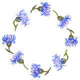 Round frame with watercolor drawing cornflowers Royalty Free Stock Photography