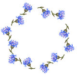 Round frame with watercolor drawing cornflowers Stock Photography