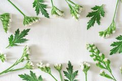 Round frame of white flowers and green leaves. Spring pattern stock images