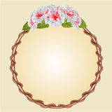 Round frame with whites hibiscus vector Royalty Free Stock Photography