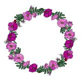 Round Frame with Wild Roses. Summer Flowers Greeting Card or Wedding Background. Hand Drawn Illustration. Doodle Style. Round Frame with Wild Roses. Summer Stock Photo