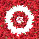 Round frame with wreath from christmas flowers Stock Image