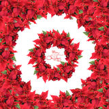 Round frame with wreath from christmas flowers Stock Photos