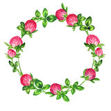 Round frame wreath of flowering clover, the design for a card Royalty Free Stock Images