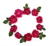 Round frame wreath made of pink roses and green leaves isolated on white background. Flat lay. Round frame wreath made of pink roses and green leaves isolated stock photography